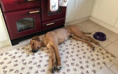 Is your family pet safe at home?